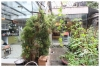 A nice house with big garden for rent in Ciputra, Tay ho